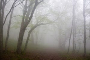 Read more about the article JANUARY FOG