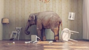 Read more about the article THE ELEPHANT IN THE ROOM