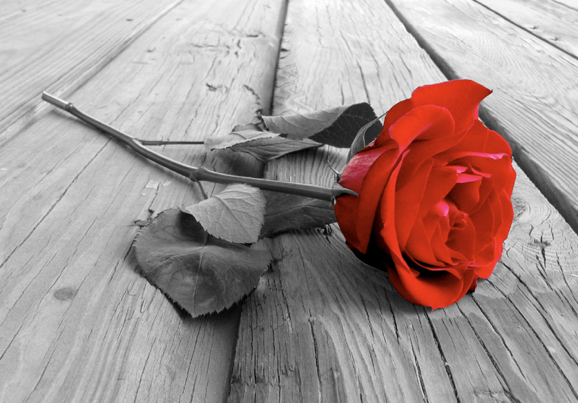 You are currently viewing A ROSE BY ANY OTHER NAME